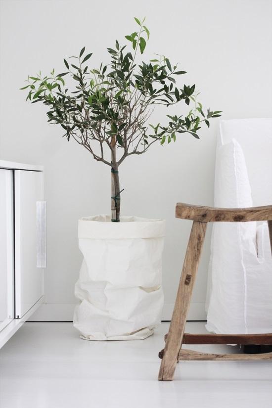 contenitori di carta per le piante