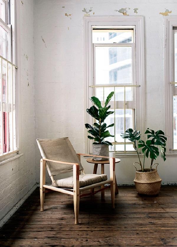 decorare con le piante